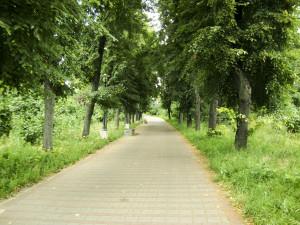 дорога крізь парк