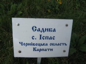 IMG_1227